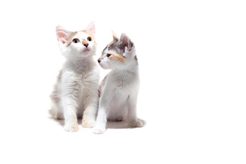 Kittens, Pet Photography, Austin