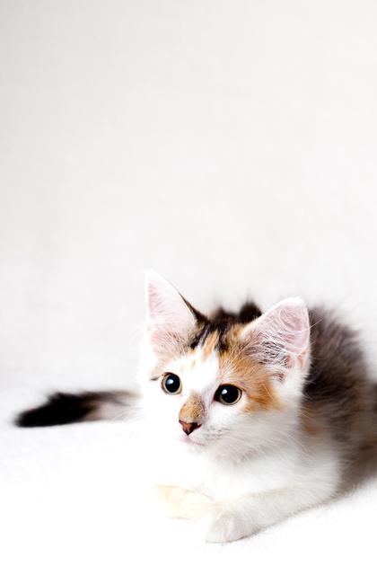 Kitten, Pet Photography, Austin